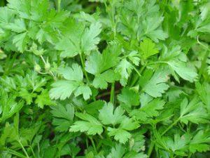 סלט ירוקים